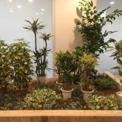 観葉植物 コーディネートⅡ