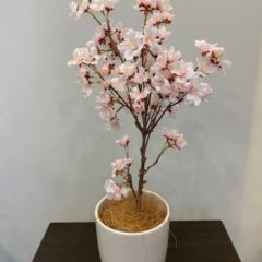 Interior Green みさと桜