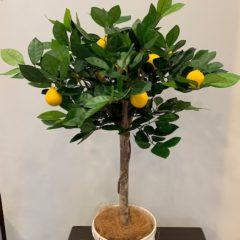 Interior Green レモンの木