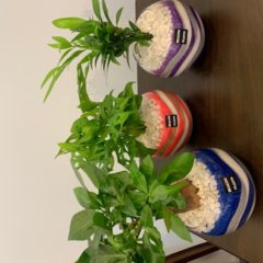 サンドアート観葉植物